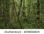 green woods   Shutterstock . vector #604806824