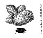 strawberry vector drawing.... | Shutterstock .eps vector #604813640