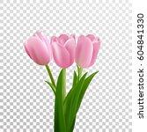 Tulips. Pink Vector Tulips...