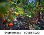 Garden After Rain. Apple ...