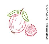 drawing red pomegranate fruit... | Shutterstock .eps vector #604928978