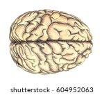 human brain view from above ... | Shutterstock . vector #604952063