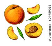 peach vector drawing. isolated... | Shutterstock .eps vector #604959098
