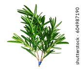 a large sprig of fresh rosemary ... | Shutterstock . vector #604987190
