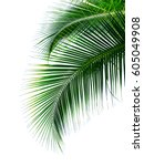 tropical coconut palm leaves... | Shutterstock . vector #605049908