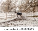 isolated horse in fenced area... | Shutterstock . vector #605088929