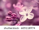 lilac flowers macro background | Shutterstock . vector #605118974