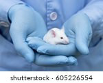 Stock photo small experimental mouse is on the researcher s hand 605226554