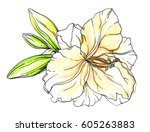 white yellow lily flower... | Shutterstock . vector #605263883