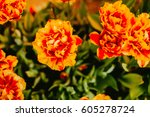 orange color on the background... | Shutterstock . vector #605278724
