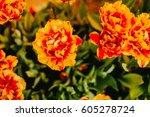 orange color on the background... | Shutterstock . vector #605278724