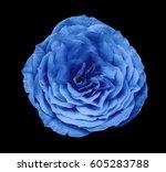 blue rose flower  black ...   Shutterstock . vector #605283788