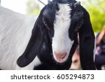 goat market   bakra mandi  ...   Shutterstock . vector #605294873