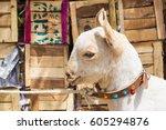 goat market   bakra mandi  ...   Shutterstock . vector #605294876