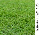 Natural Green Trimmed Grass...