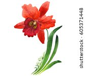 wildflower orchid flower in a... | Shutterstock . vector #605371448