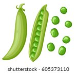 cartoon green peas  flat design ... | Shutterstock .eps vector #605373110