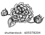 hand drawn and sketch style... | Shutterstock .eps vector #605378204