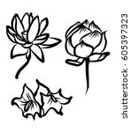 hand drawn and sketch lotus... | Shutterstock .eps vector #605397323