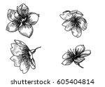 hand drawn peach blossom or... | Shutterstock .eps vector #605404814
