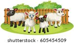 Four Little Lambs In A Yard