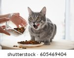 Stock photo owner feeding cute cat at home 605469404