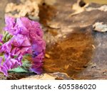 Purple Flowers On Driftwood  ...