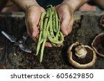 hands holding green beans | Shutterstock . vector #605629850