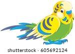 budgerigar | Shutterstock .eps vector #605692124