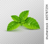 fresh mint leaf. vector menthol ... | Shutterstock .eps vector #605787254