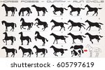 Stock vector horse icon set horses vector clip art isolated silhouettes 605797619