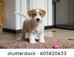 jack russell terrier   Shutterstock . vector #605820653