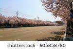 cherry blossom road | Shutterstock . vector #605858780