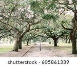 Row Of Oak Trees In Charleston...