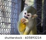 Image Of A Squirrel Monkey...