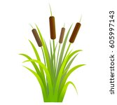 water reed plant cattails green ...   Shutterstock .eps vector #605997143