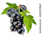 black currant branch isolated... | Shutterstock . vector #606022868