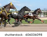 Stock photo horses trotter breed in motion on hippodrome harness horse racing 606036098
