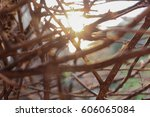 in the garden with trees  the... | Shutterstock . vector #606065084