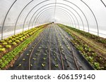 newly planted seedlings in an... | Shutterstock . vector #606159140