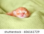 Stock photo red newborn kitten sleeping on a green blanket 606161729