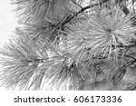 close up of frosted pine... | Shutterstock . vector #606173336