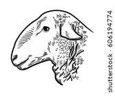 sheep head  fresh beef organic... | Shutterstock .eps vector #606194774