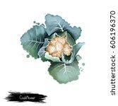 cauliflower isolated on white.... | Shutterstock . vector #606196370