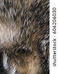 texture of furs badger wild | Shutterstock . vector #606206030