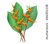 heliconia flowers  parrot's... | Shutterstock .eps vector #606301238