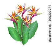 strelitzia flowers  bird of... | Shutterstock .eps vector #606301274