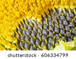 Core Of Of The Flower  Texture. ...