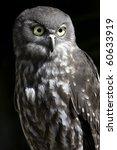 portrait shot of a barking owl... | Shutterstock . vector #60633919