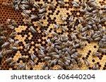 Beehive Inside